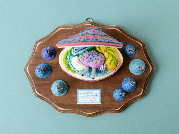 桃五目貝の解剖模型