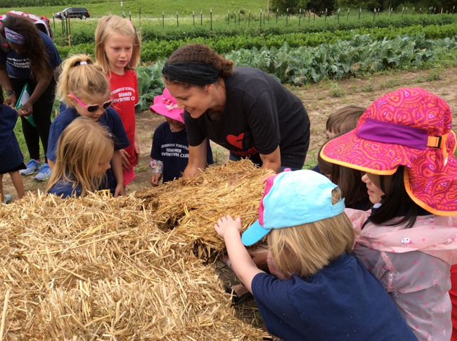 Primrose students weed, harvest, and lay hay at a Madison Area Food Pantry Gardens at Blackhawk Church in Middleton