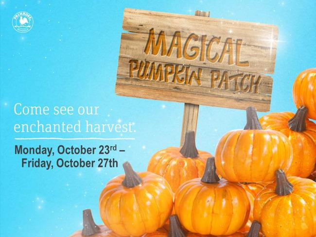 Magical Pumpkin Patch