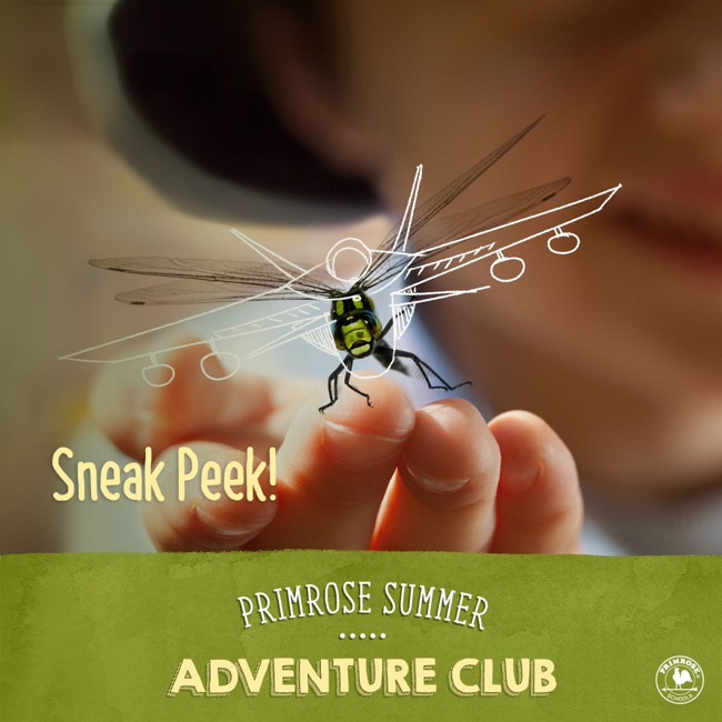 Summer adventure club poster with a close up of a dragonfly perched on a little boy's fingers