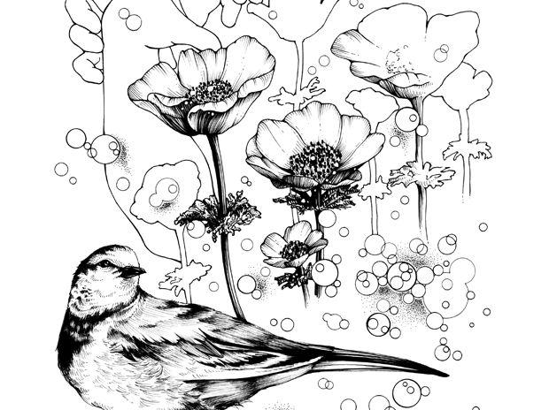 花鳥 アネモネと白鶺鴒 2017如月