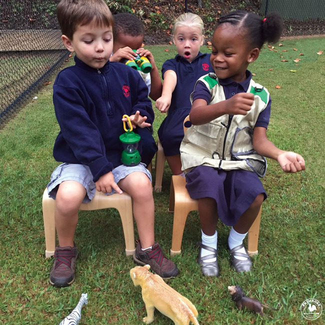 Four young Primrose students pretend to drive a truck on a wildlife safari with toy animals scattered all around them