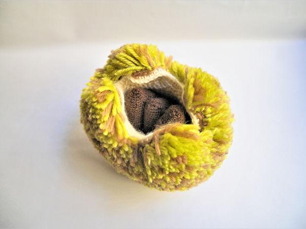 毬栗 Chestnut
