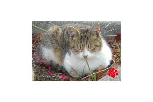 猫 にゅーいにゃー年賀状