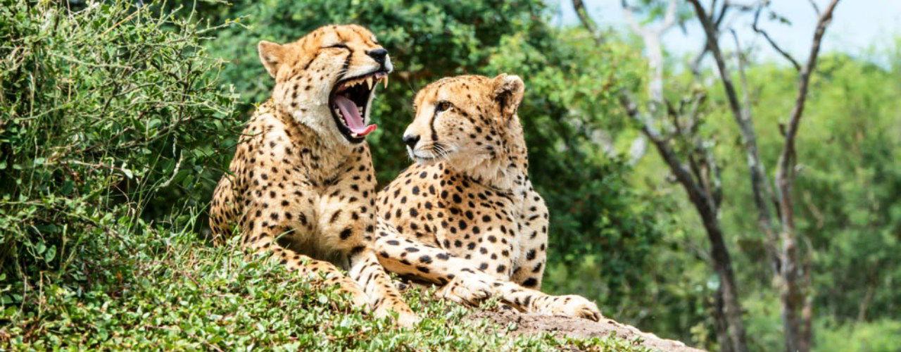 Engel & Völkers - South Africa - HoedspruitHoedspruit - http://www.ucarecdn.com/702a8523-92ad-4cf4-841c-5d2639b5e86e/-/crop/1280x500/0,0/
