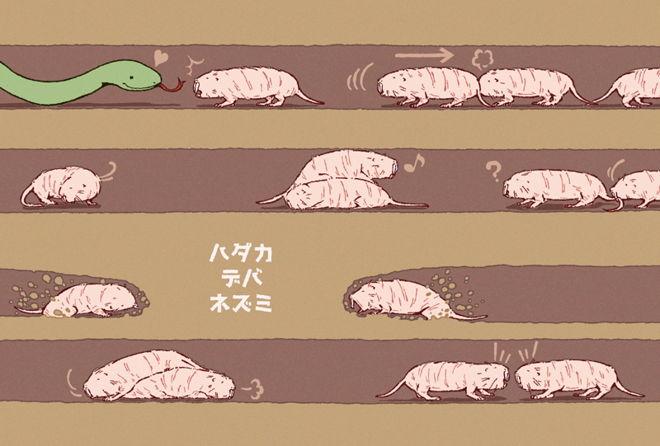 ハダカデバネズミの画像 p1_16