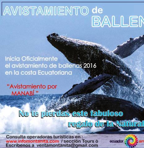 Comienza Oficialmente el Avistamiento de Ballenas 2016 !!