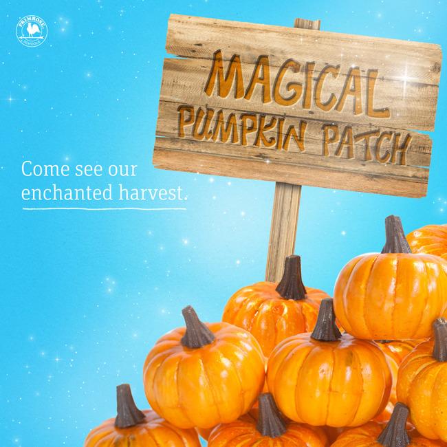 Magic Pumpkin Patch