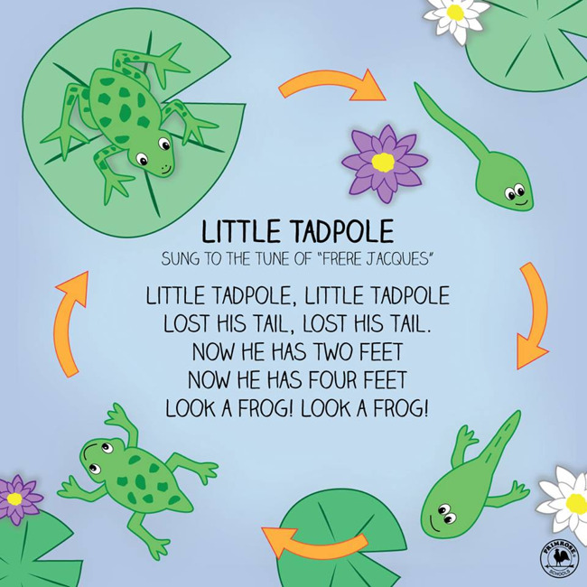 Illustration depicting the life cycle of a frog