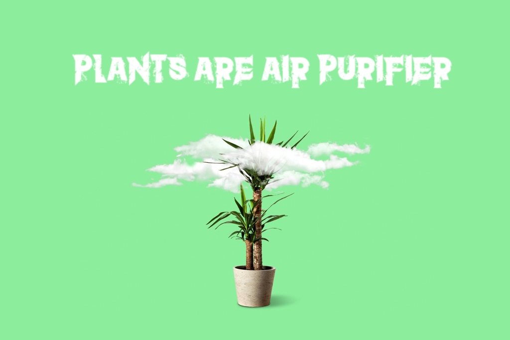 plants share special connection and work as air purifier