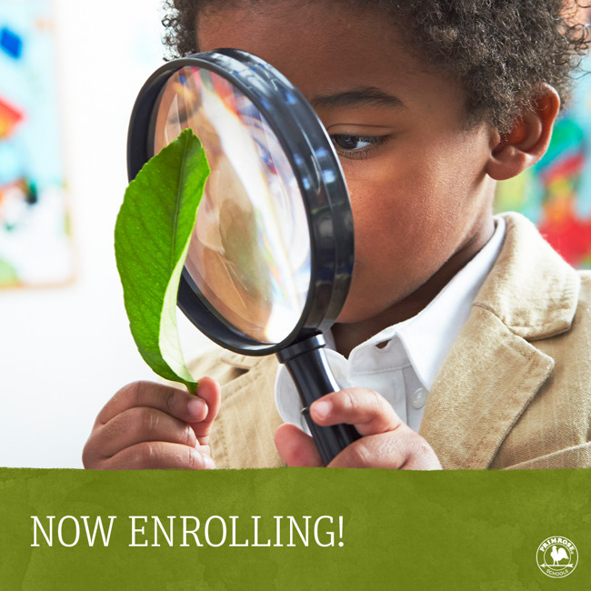 Now enrolling poster featuring a young Primrose student looks at a leaf through a magnifying glass