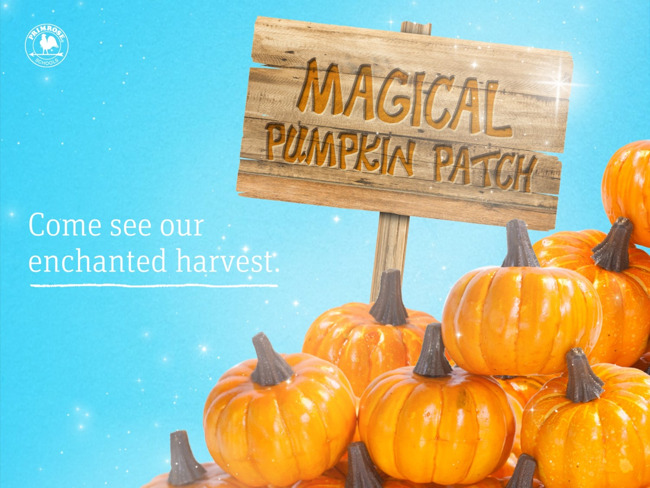 Magic Pumpkin Seed