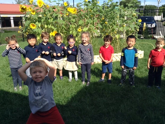 We are celebrating the sunflowers in the Primrose Patch that we grew.