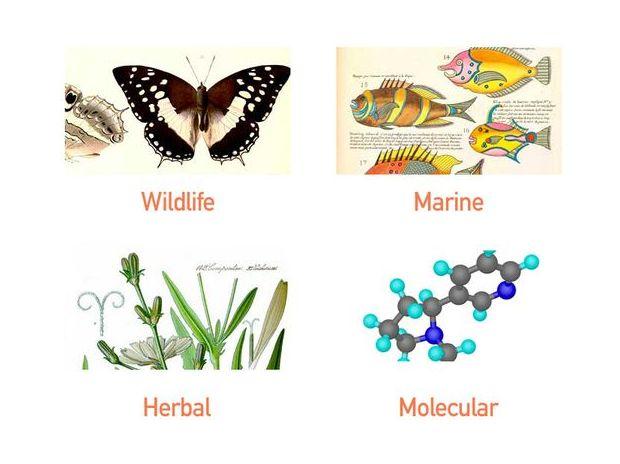 Scientific illustration  services