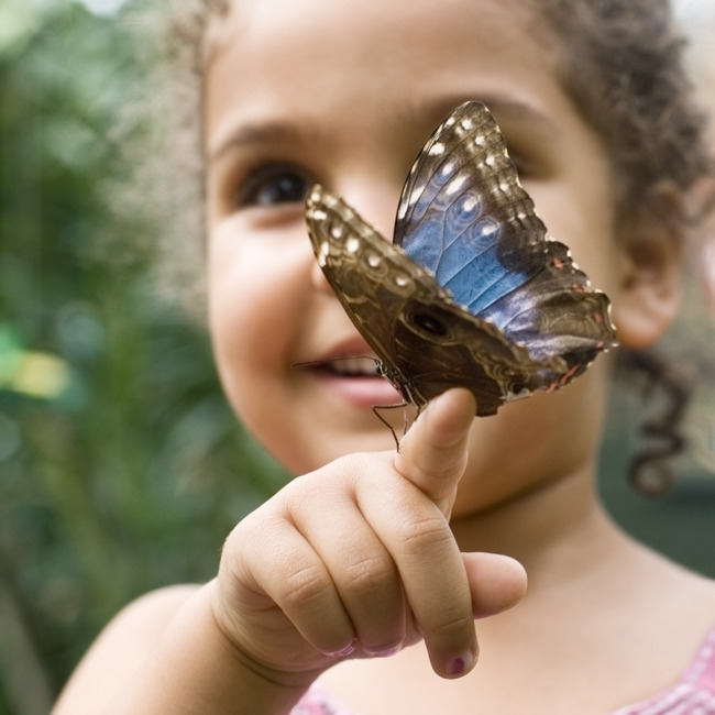 Did you know butterflies taste with their feet? Our students 