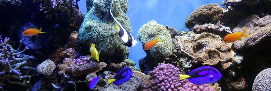 Dubai - Underwater_World_2.jpg