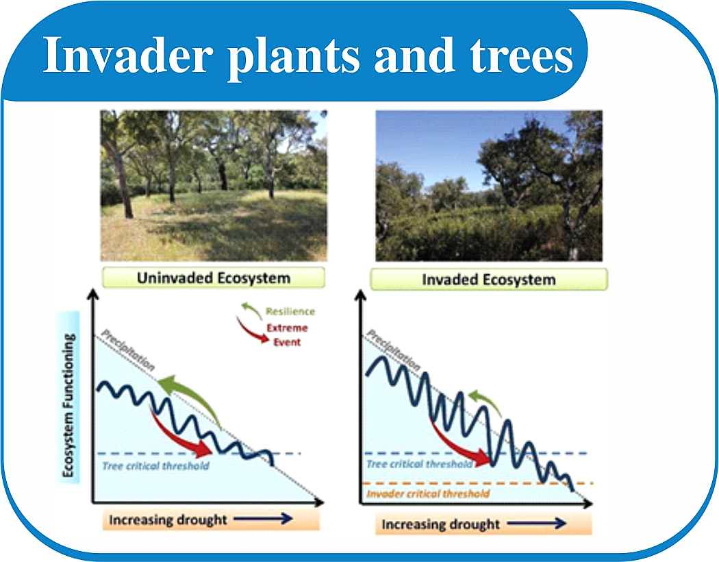 South Africa - Invader plants & Trees.jpg