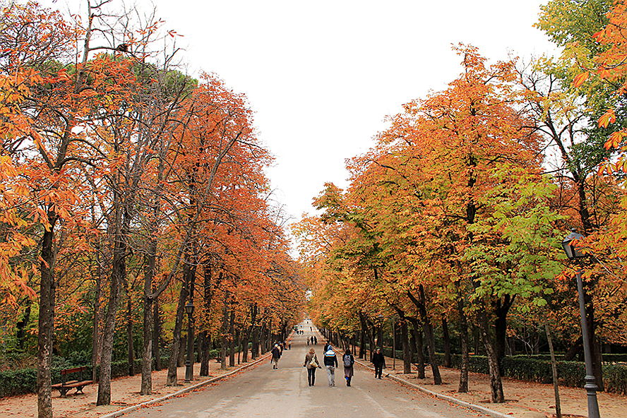 Madrid - Retiro-2.jpg