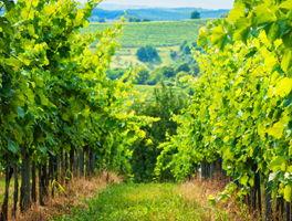 Weingüter und Sonderkulturen