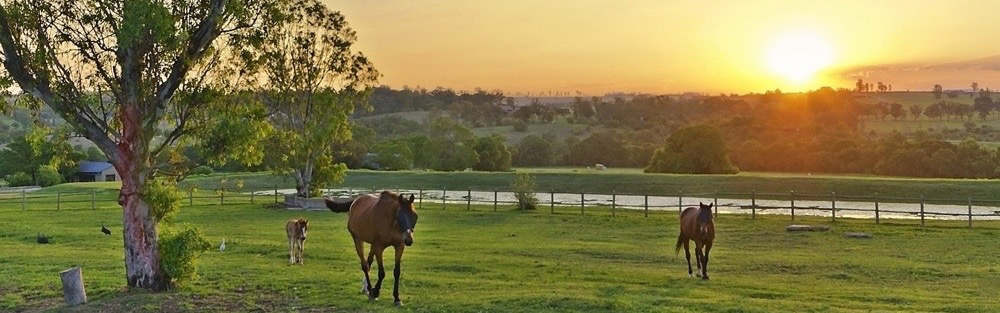 Real estate in Africa - Equestrian