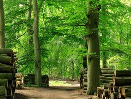 Forstbetriebe und Eigenjagden