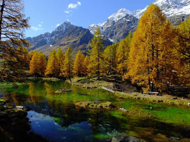 Courmayeur - valle-aosta bosco.jpg
