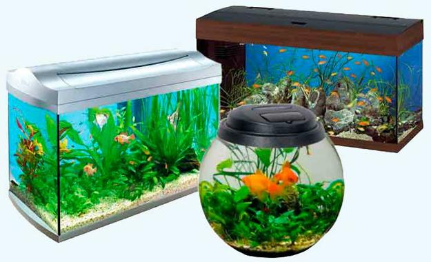 95 Caine Road, Mid Levels - fish-aquariums-feng-shui-wealth-1 (1).jpg