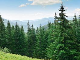Internationale Agrar- und Forstinvestments